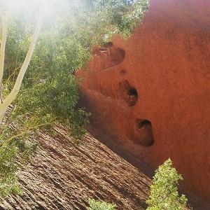 DesertAwakeningsTour