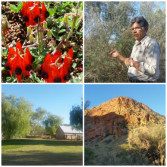 alice-springs-desert-awakenings