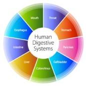 digestivehealth