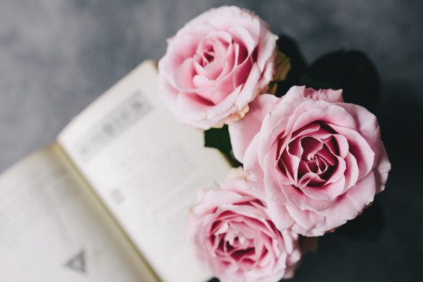 kaboompics_Lovely roseses and book